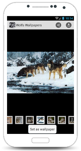 Wolfs Wallpapers