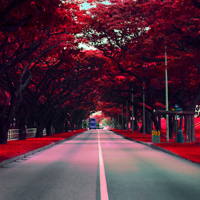 Along the red trees. by Dee S. Alkhatib - City,  Street & Park  Street Scenes ( bus, sky, red, bushes, path, summer, trees, road, bustop, singapore, sidewalk )