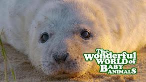 The Wonderful World of Baby Animals thumbnail