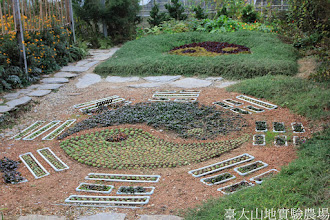 Photo: 拍攝地點: 梅峰-溫帶花卉區 拍攝日期: 2014_12_17_FY