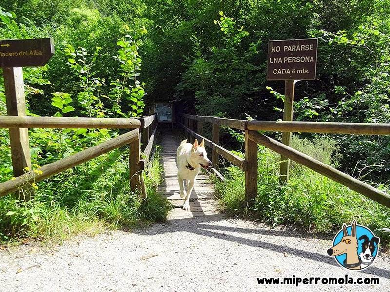 Can de Palleiro sobre un puente en la Ruta del Alba