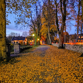 Autumn tree by Anette Karlsson - Novices Only Street & Candid ( autumn leaves,  )