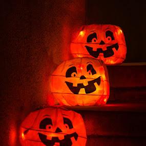 Jackolanterns by Megan Richardson - Public Holidays Halloween ( lights, jack-o-lanterns, pumpkin, pumpkins, night, pwc77, decorations, halloween )