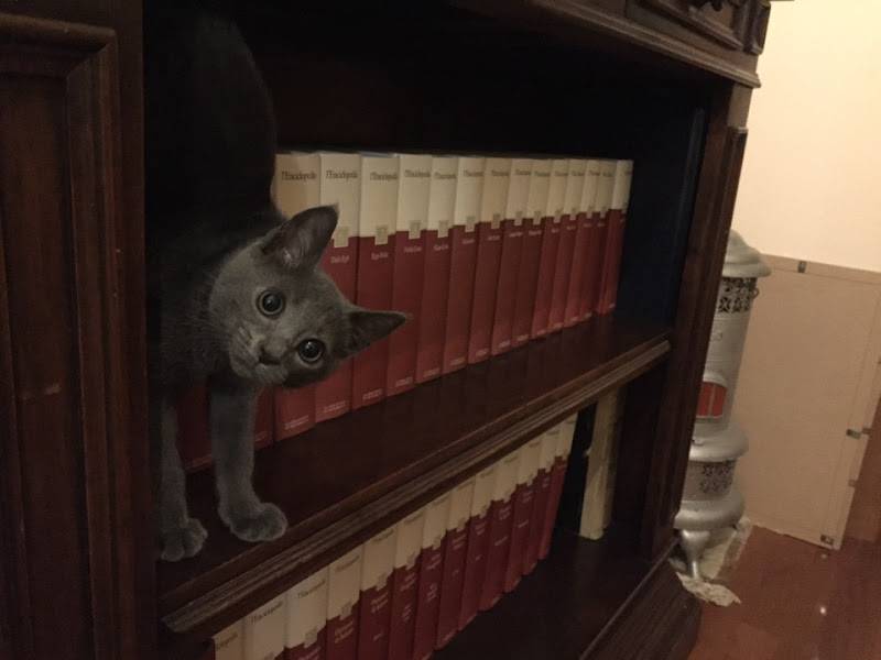 Intruso tra i libri di carm_ian_