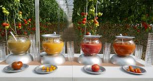 Presentación de novedades en tomate Rijk Zwaan.