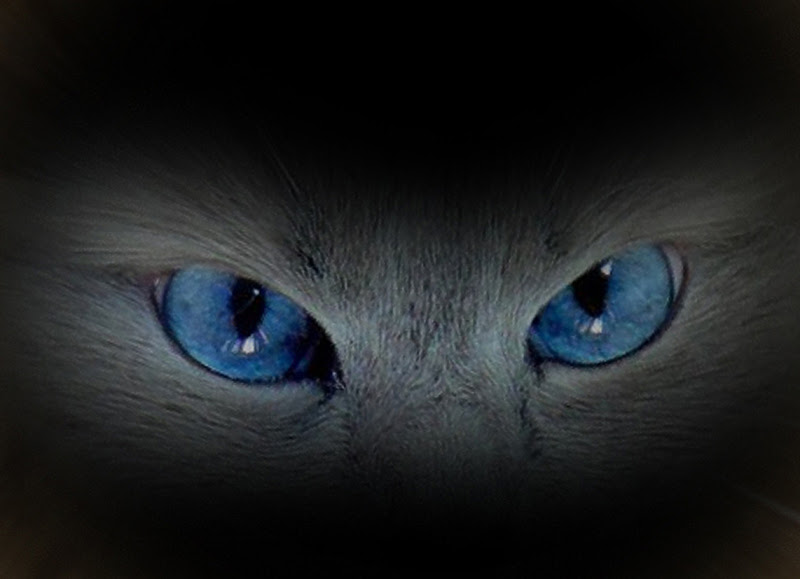 a me gli occhi di mauriziosettimi