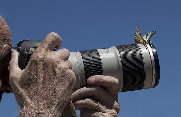 il fotografo e il podalirio di roberto-copeta