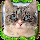 Stray Cat Simulator icon