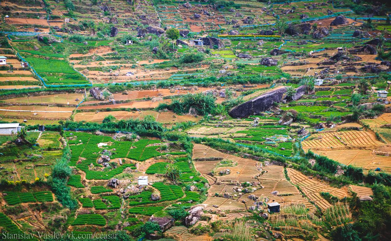 Сельское хозяйство Шри-Ланки