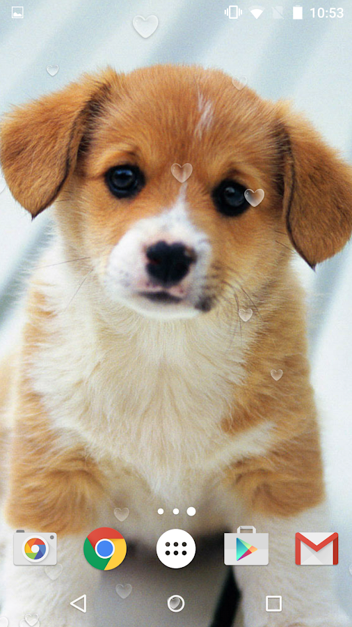 Cute Puppies Live Wallpaper Android Apps On Google Play