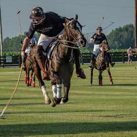 Hickory Hall Polo by Dennis McClintock - Sports & Fitness Other Sports ( horse, horseback, animal, polo match )