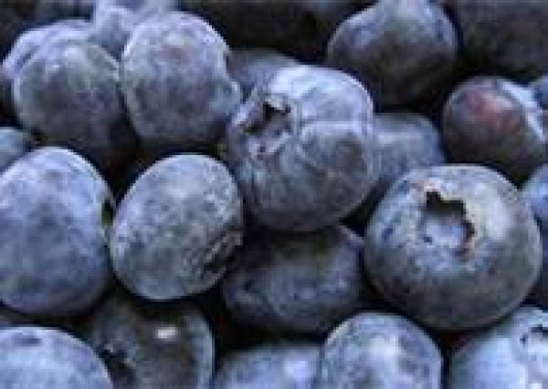 Dehydrating Blueberries Recipe