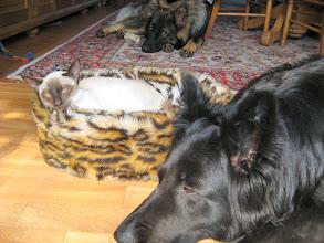 Photo: Makker is omringd door de honden