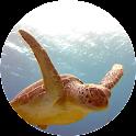 Turtle Video Live Wallpaper icon