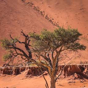 NAMIB by Theuns de Bruin - Landscapes Deserts ( namibia )