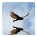 3D Bird Live Wallpaper icon