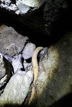 Photo: Gyökérzóna a Szentendrei-barlangban.