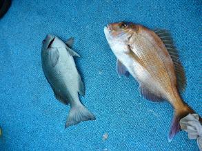 Photo: 最後はアダチさん!真鯛とクロのダブルでフィニッシュ!