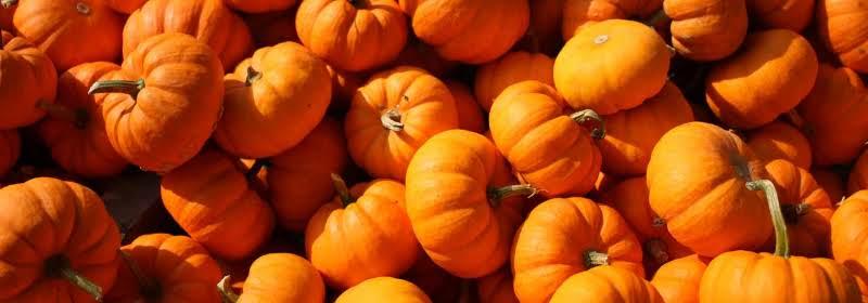 Pumpkin Patch Recipes