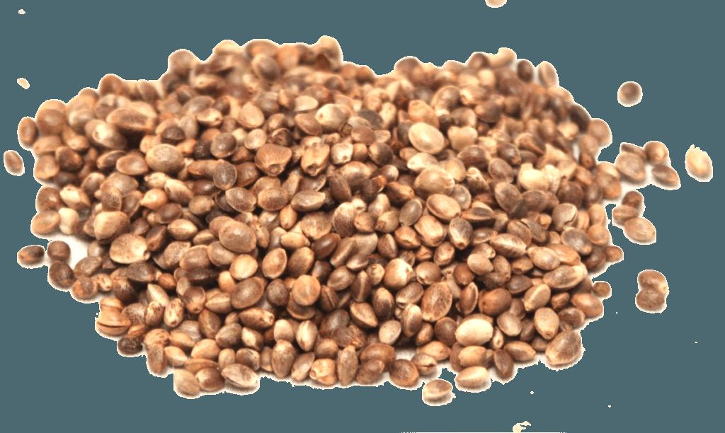 ヘンプシードはヘンプ植物に由来し、主にダイエット製品に使用されます