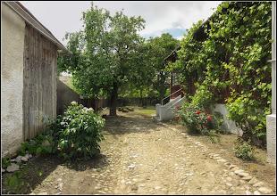 Photo: Bujori (Paeonia), din Turda - Str. Salinelor, Nr. 15   - 2019.05.29