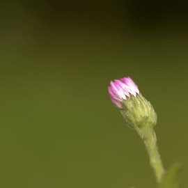Tiny World by Sandip Rajguru - Nature Up Close Other Natural Objects ( macro, nature, closeup, floral photography, flower,  )