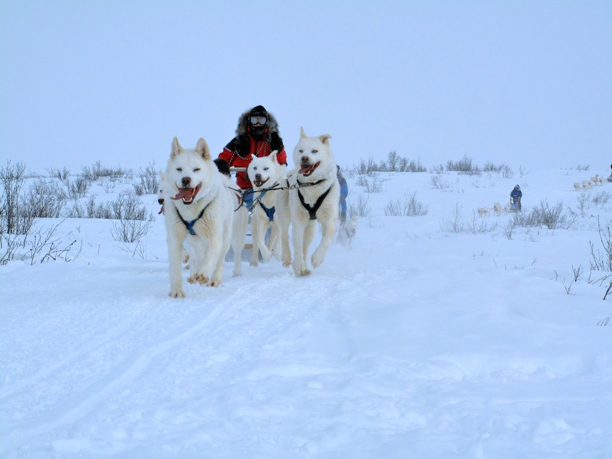 Arctic Canada Inuvik Winter Camping Tundra Dog Sledding // Patricia mushing her team of dogs