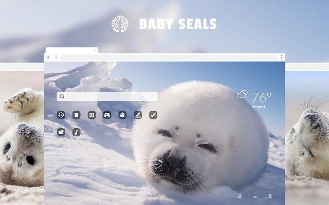 Baby Seals HD Wallpaper New Tab Theme
