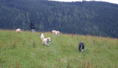 Photo: Ramsau  wandeling, rennen en spelen op de berg