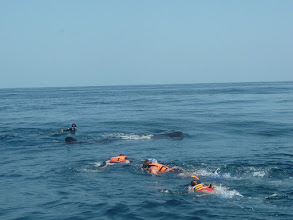 Photo: We Swam with the Whale Shark