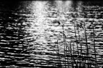 Photo: randoms  #bwphotography  #monochrome  #lakephotography