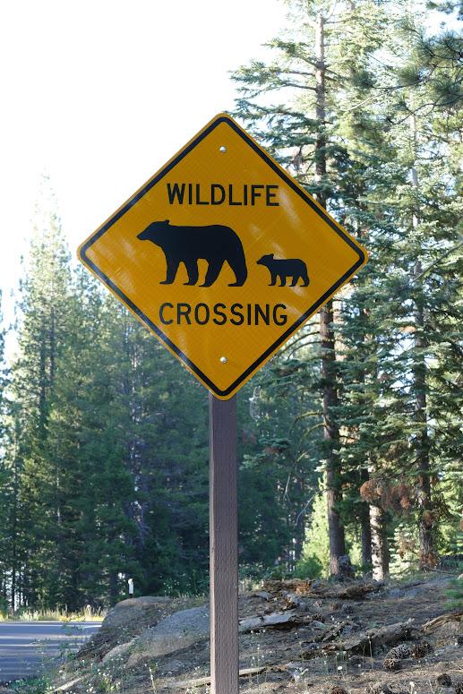 Yosemite - Bear Sign