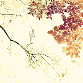 Barren w/Abundance - IA by Tina Dare - Digital Art Things ( leaves, nature, patterns, ia, abstract, inverted, digital art )