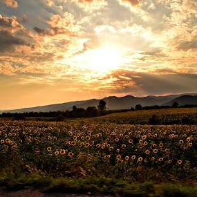 Countryside landscape. by Suciu Corina - Landscapes Sunsets & Sunrises (  )