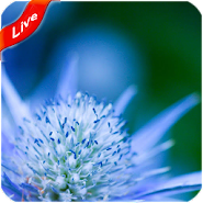 Nice Live Wallpaper 14 Latest Apk Download For Android