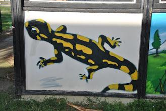 Photo: La salamandre de Veracruz vous indiquera le local !