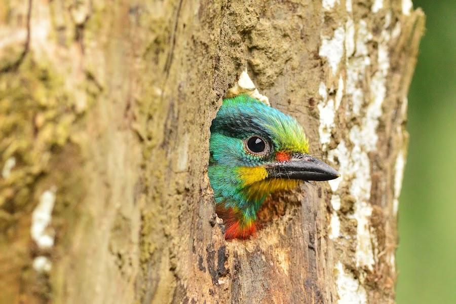 Babyface by C.C. Chung - Animals Birds