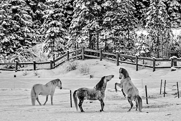 Playing in the snow di alfonso gagliardi