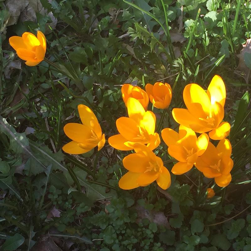 Primi fiori di  Antonella Giuliani