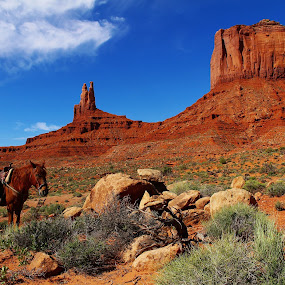 Navajo Ride by Arifah Mardiningrum - Landscapes Caves & Formations ( ride, desert, horse, canyon, valley )