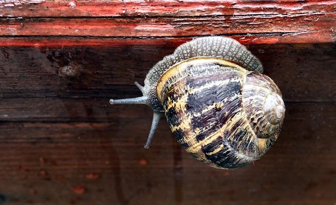 a snail under the rain di smpaint