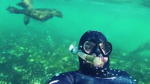 Oceans & Rivers thumbnail