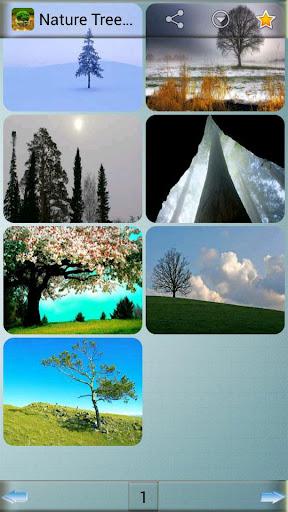 自然樹壁紙