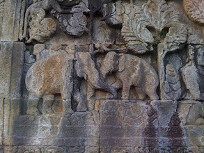 Photo: Elephants weren't extinct in Java at the time