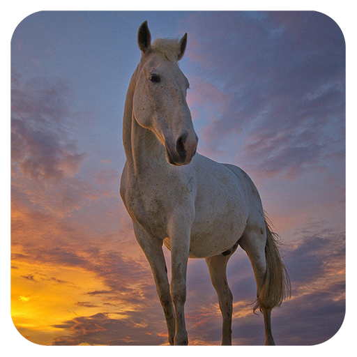 休闲の馬のパズル LOGO-記事Game