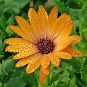 by Carola De Jager - Nature Up Close Flowers - 2011-2013