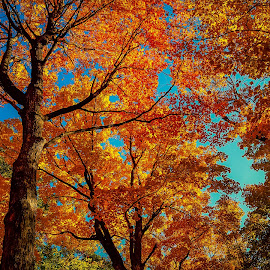 autumn by Sunil Pawar - Landscapes Forests ( beautiful, fall, nature, autumn, travel )