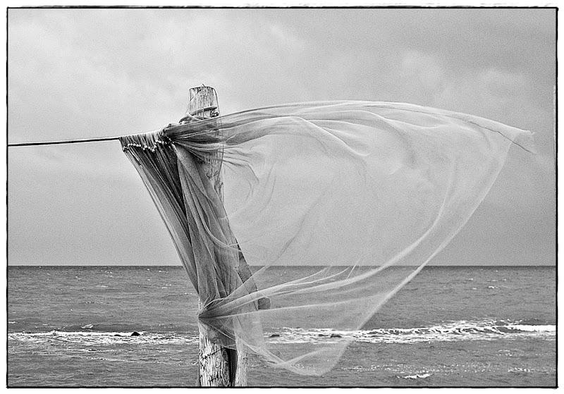 Il vento di Alessandra Ivella