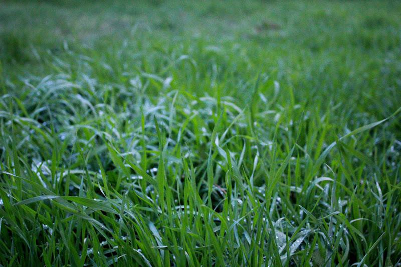 GRASS. di nazariadalbon