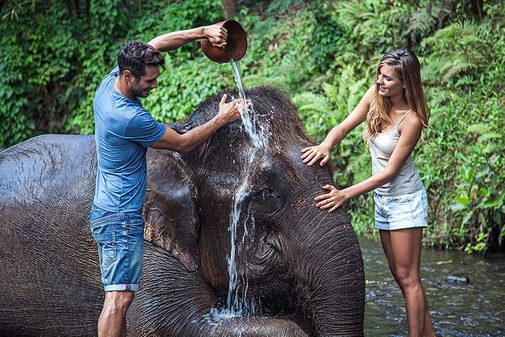 elephant in lake wildlife parks